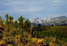 De kleine Alpjes