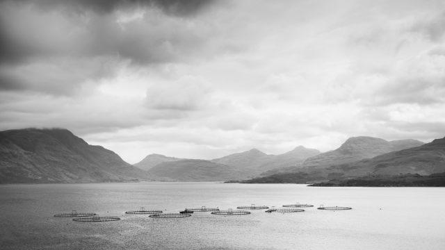 Viskwekerijen in Loch Torridon