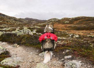 Wandelen in Noorwegen mét hond